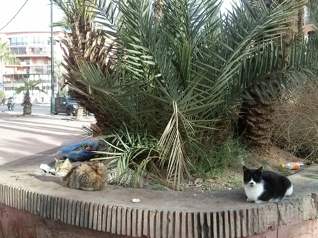 Street cats in Marrakech